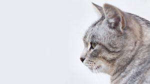 cat header