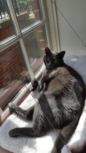 Beast in Sunny Seat Large Cat Window Perch