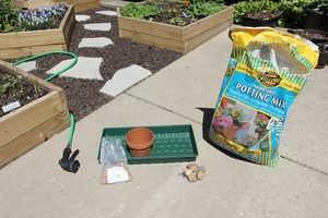 how to grow cat grass 1 - setting up