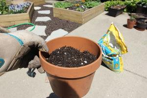 how to grow cat grass 3.1 - soil