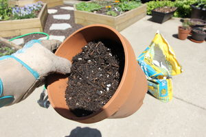 how to grow cat grass 3.2 - soil