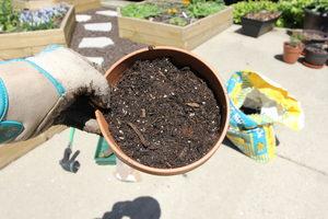 how to grow cat grass 5 - top off