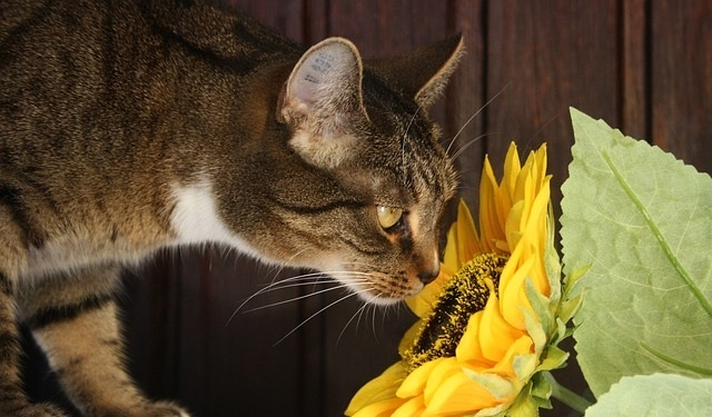 How To Keep Cats From Eating Houseplants