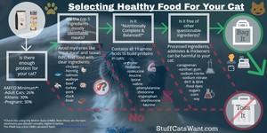 wet vs dry cat food infographic full size
