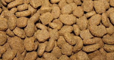 What is the best dry cat food
