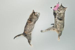 cats playing near carrier