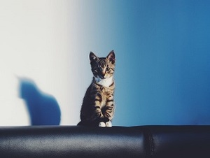 your cat is alone all day