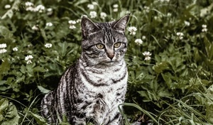 cat safe outdoor plants