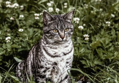 22 Cat Safe Outdoor Plants For Your Garden