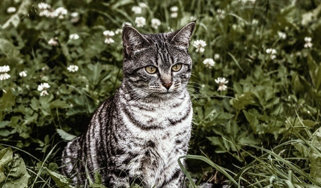 cat safe outdoor plants