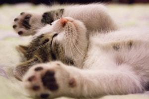 cat showing off his paws