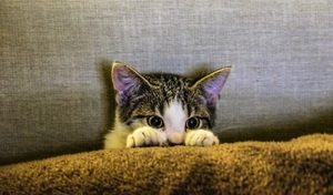 how to stop a cat from scratching the carpet