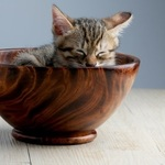 kitten in a wooden bowl