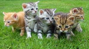 5 kittens outside in the grass