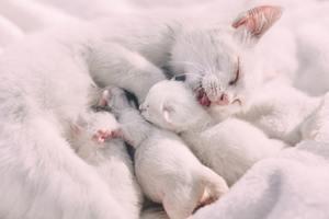 kittens nursing