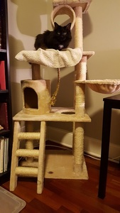 lexi on the go pet club cat tree