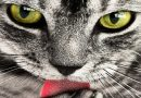 Why Do Cats Lick Their Owners? Are We Delicious?