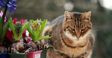 stop cats from fouling your garden