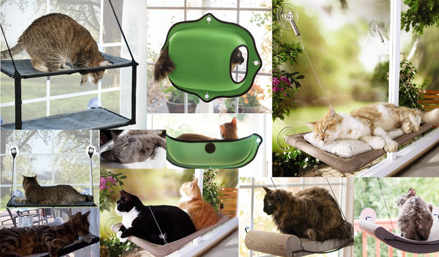 best cat window beds