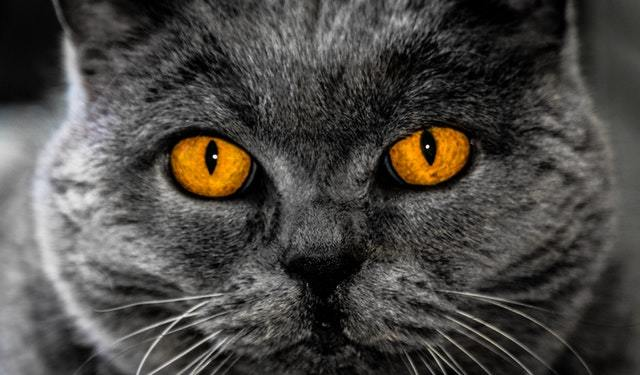 What is the best time to neuter a cat