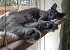 a grey cat sleeping in a window bed