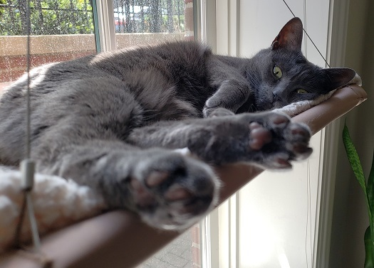a grey cat sleeping in a window bed