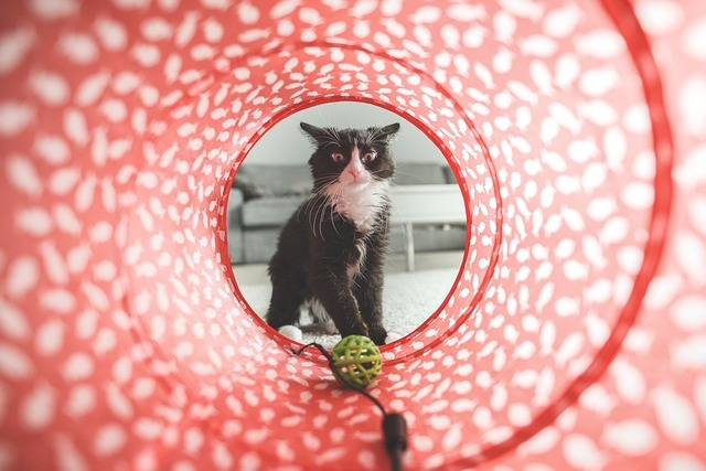 cat at the end of a toy tunnel