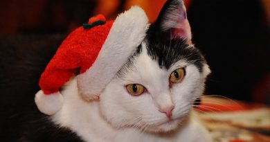 cat with a santa hat on