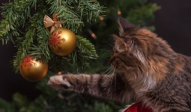cat playing with a Christmas tree
