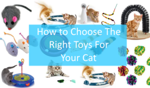 Many cat toys and a question of how to choose the right one super imposed