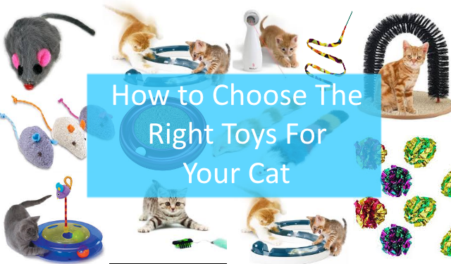 How to Choose Right Toys For Your Dog