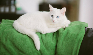 Cat of the week Tesla