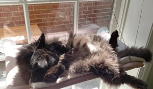 a black cat sunning herself in a window bed