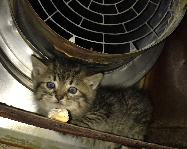 a kitten under a steam event outside