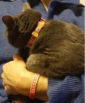 the pettsie christmas cat collar on a grey cat and the friendship bracelet on a man's wrist