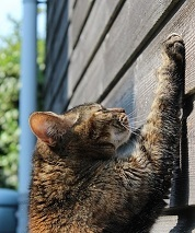 a cat scratching a wall