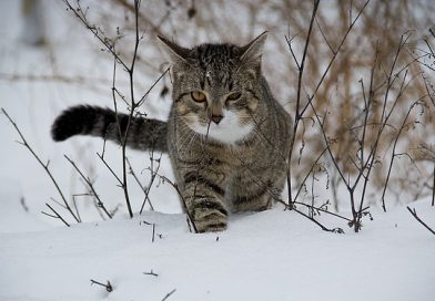 a cat walking in the snow