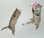 two kittens jumping
