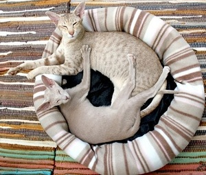 two cats sleeping in the same bed in the sun