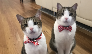 Smeags and Frodo, two cats with red and white collars