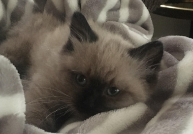 Henry – Cat Of The Week – February 5th 2018