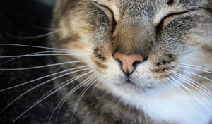 a cat's face with white whiskers