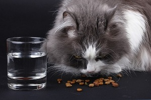 dry cat food with a glass of water next to it