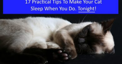 17 Practical Tips To Make Your Cat Sleep When You Do. Tonight.