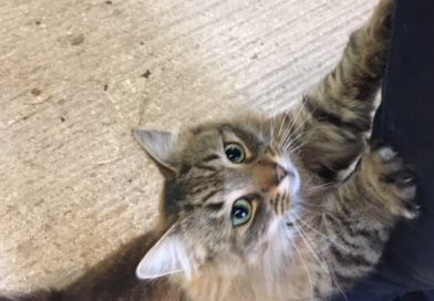 Annie – Cat Of The Week – April 2nd 2018