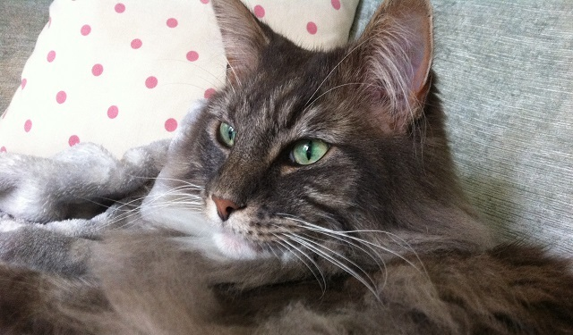 Sindre – Cat Of The Week – April 23rd 2018