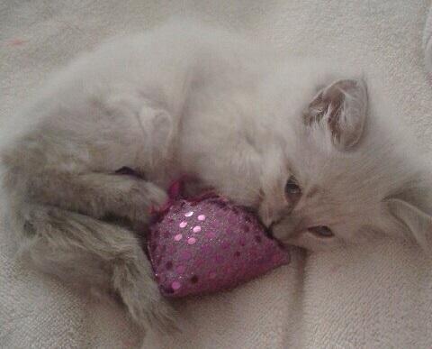 Petunia as a kitten