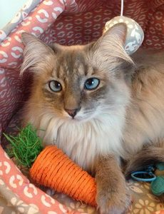Petunia looking cute with her carrot