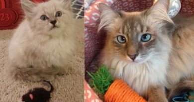 petunia as a kitten and as an adult