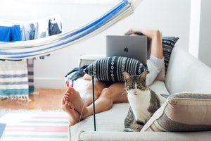 a human ignoring their cat and playing on their laptop